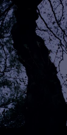 Angstbaum?